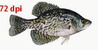 fish-72dpi